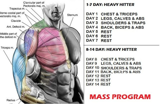 Muscle Mass And Strength Increase- 10 Simple Tips For Great Results   Project NEXT