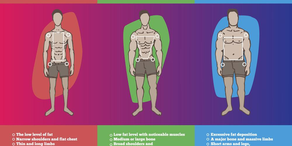 """Mesomorph Diet & Workout Guide""的图片搜索结果"