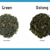 Oolong Tea VS Green Tea — Everything You Need to Know | by Herb Examiner |  Medium