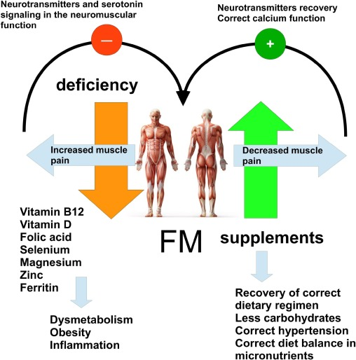 Fibromyalgia and nutrition: Therapeutic possibilities? - ScienceDirect