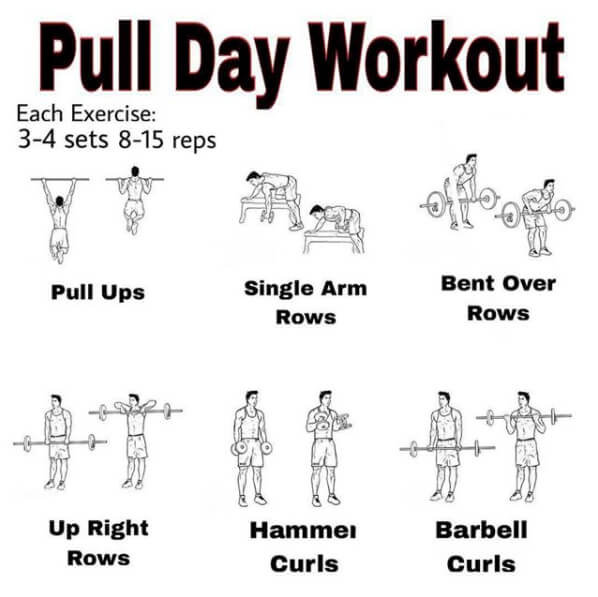 Pull Day Workout ! Healthy Fitness Training Plan - Yeah We Workout ! - Workouts, Exercises & More