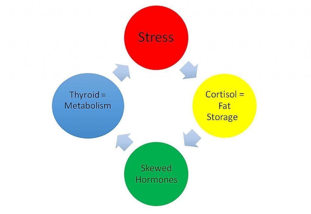 Probiotics for Fibromyalgia | The Plan