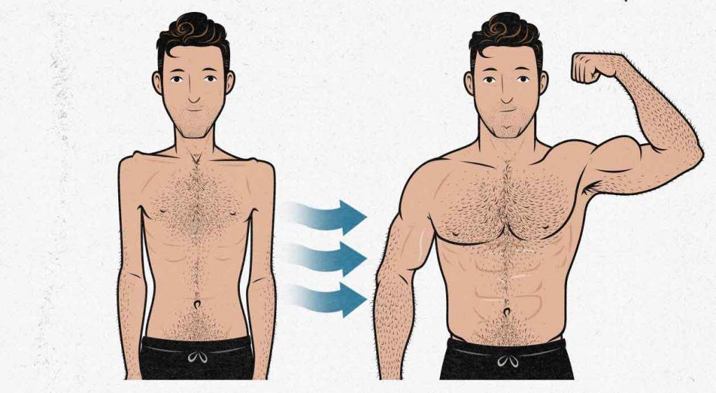 Should Ectomorphs Do Cardio While Bulking? | Bony to Beastly