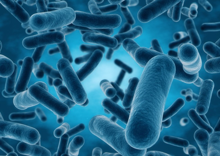 Data supports increased role for probiotics, prebiotics in healthy aging, study finds